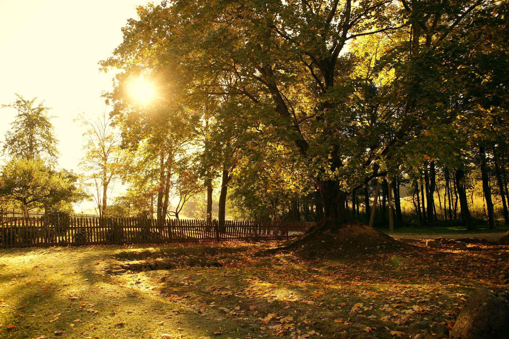 Lietuvos tautinio atgimimo ąžuolynas rudenį