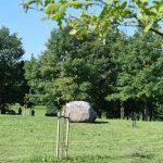 30-mečiai ir 1-mečiai Lietuvos tautinio atgimimo ąžuolyno ąžuolai
